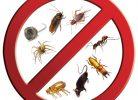 Böceklerden Kurtulmak mı İstiyorsunuz?