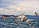 İstanbul İlaçlama İle Pirelerden Kurtulabilirsiniz