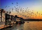 İstanbul böcek ilaçlama şirketleri